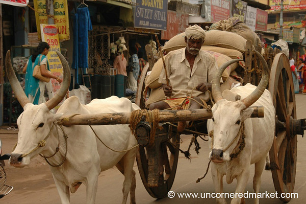 You Looking at My Ox Cart? - Kollam, India