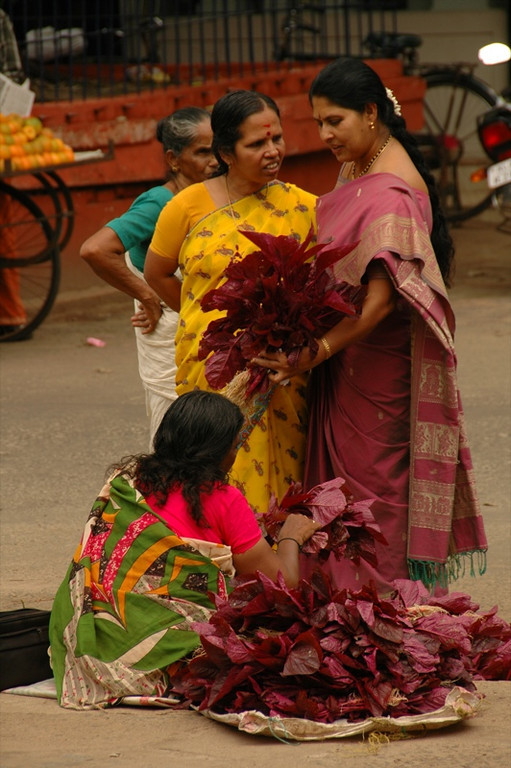 Bright Leaves for Sale - Kerala, India
