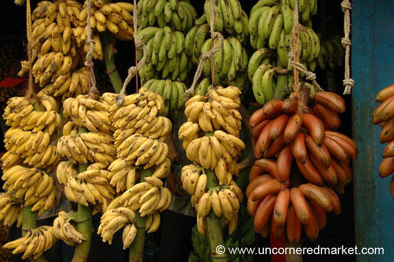 Banana Scape - Kollam, India