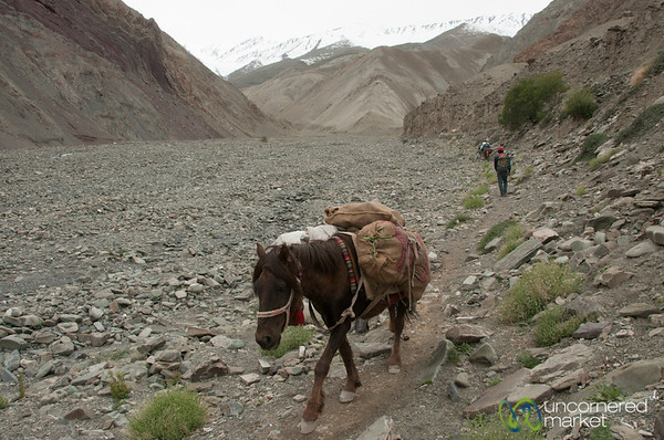 Horses Along the Markha Valley Trail - Yurutse, Ladakh