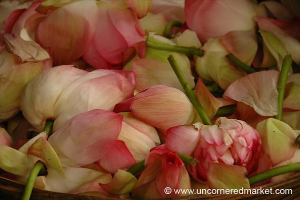 Flowers: Madurai, India