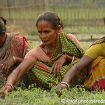 Indian Women Working in the Nursery - West Bengal, India