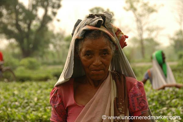 Woman Working in Tea Estates - West Bengal, India