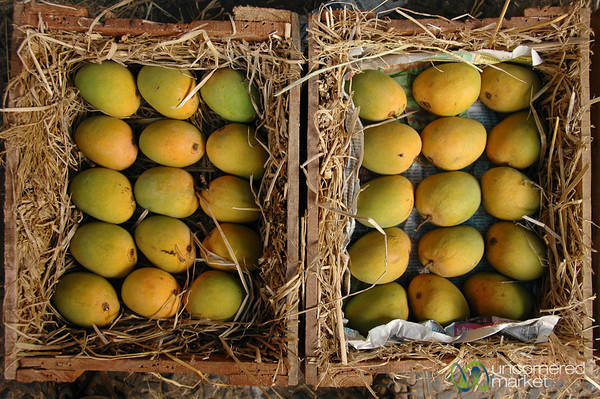Alphonso Mangoes - Mumbai, India