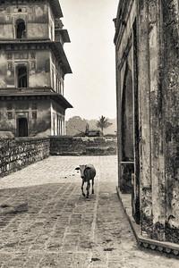 Jahanger Palace, Orchha, India