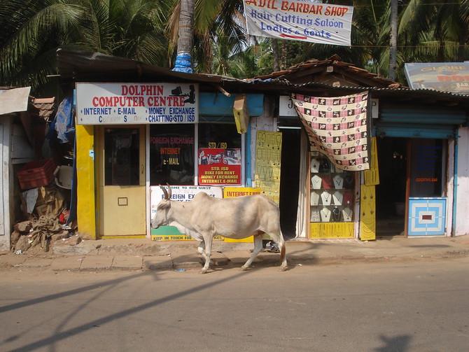 Palolem Shop Cow