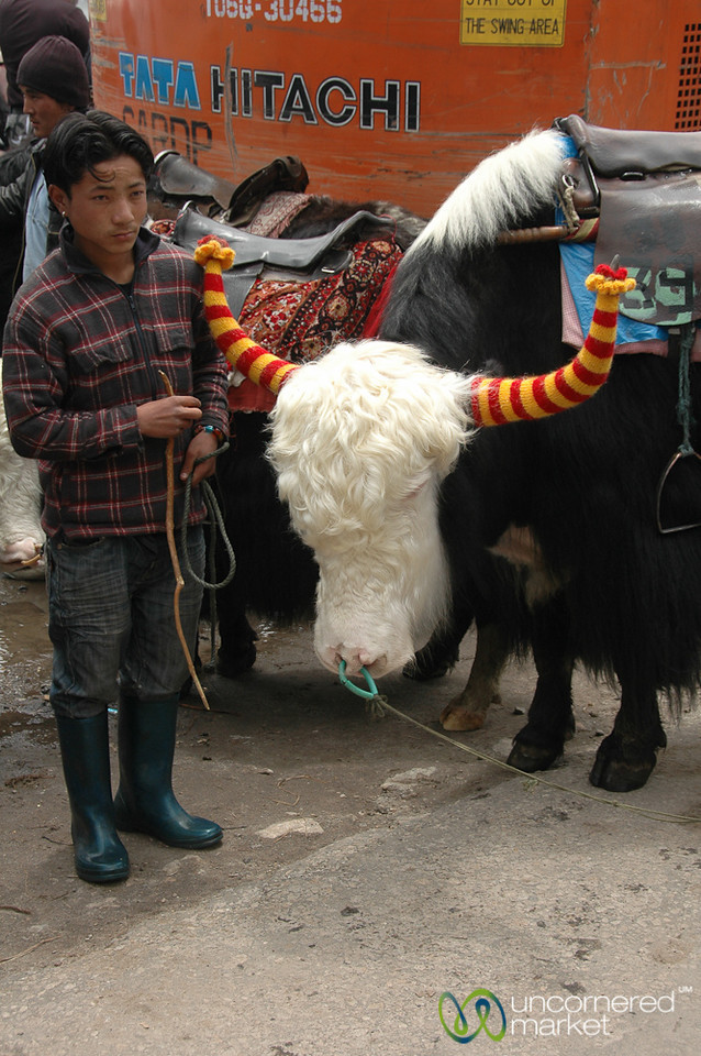 Anyone for a Yak Ride? Tsomgo Lake, Sikkim
