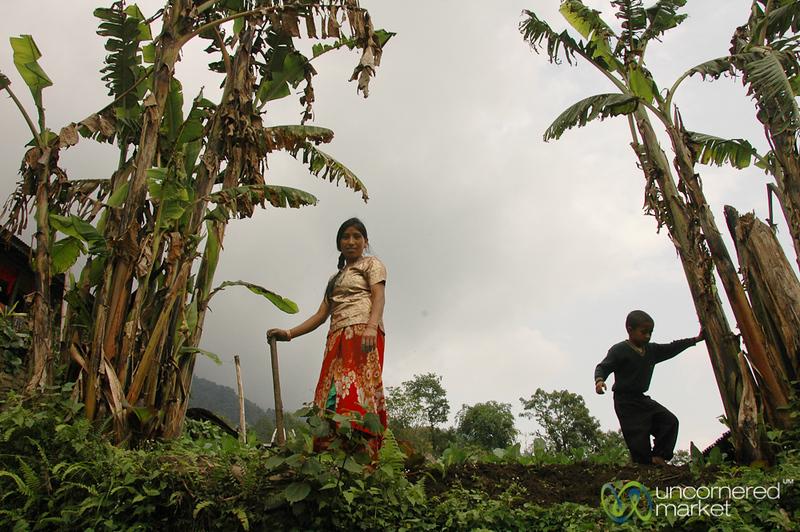 Working the Fields - Yuksom, Sikkim