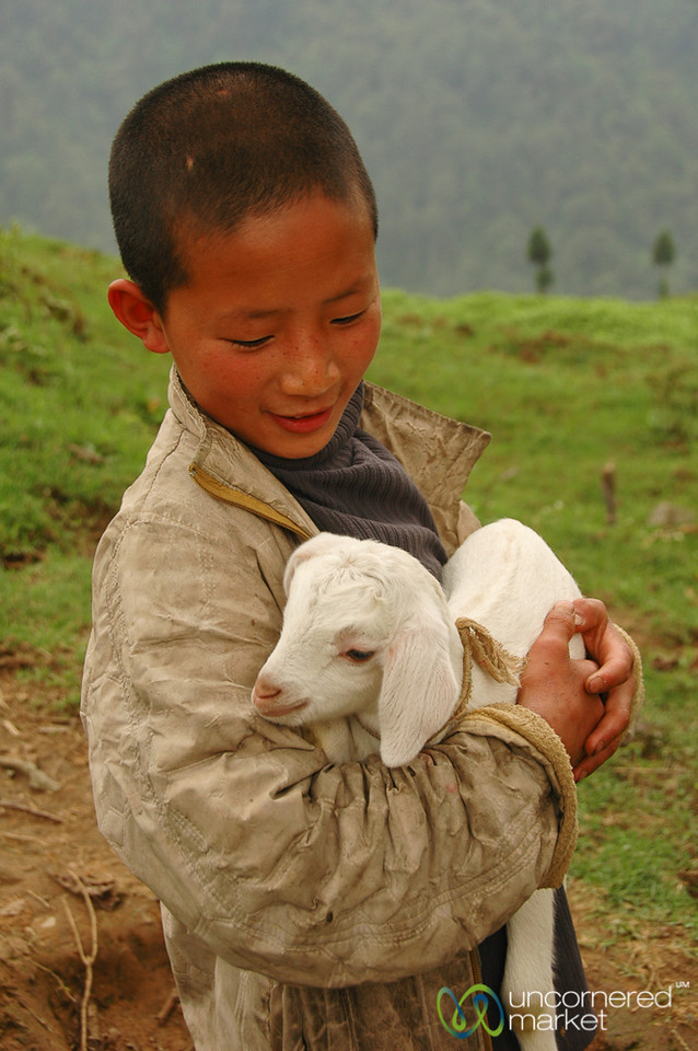 Baby Goat and Friend - Lake Khecheopalri, Sikkim