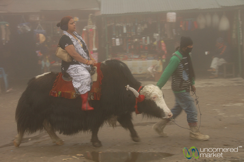 Going On a Yak Ride - Tsomgo Lake, Sikkim