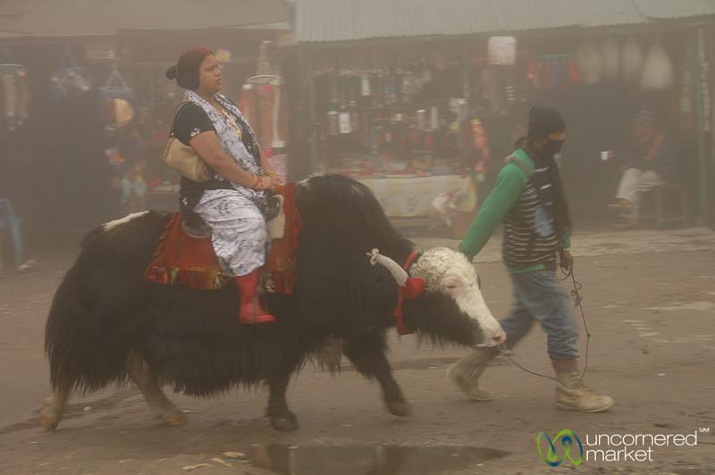 Going On a Yak Ride - Tsomgo Lake, Sikkim