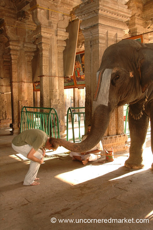 Elephant Blessing - Trichy, India
