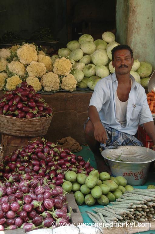 Eggplants and More - Chennai, India