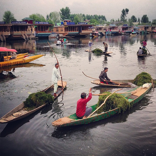The green boats, fishing for river weed. Taken at the head of Dal Gate, Srinagar #Kashmir