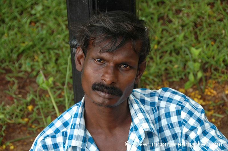 Checkered Blues - Pondicherry, India
