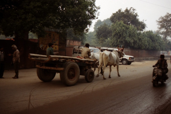 An Average Day in Agra, India