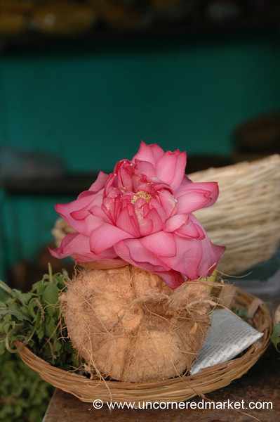 Coconut Flower