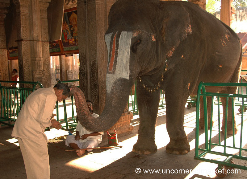 Elephant Blessing: Trichy, India