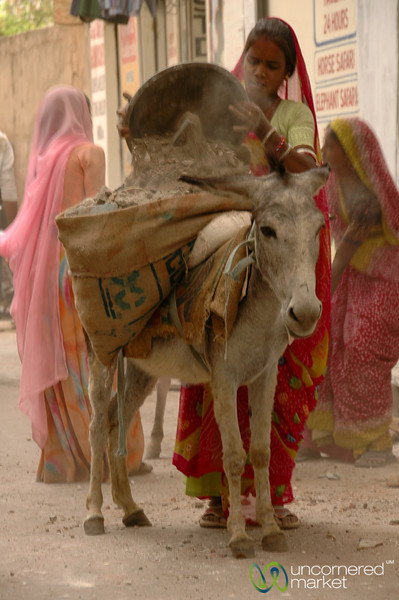 Filling Up the Donkey Sacks - Udaipur, India