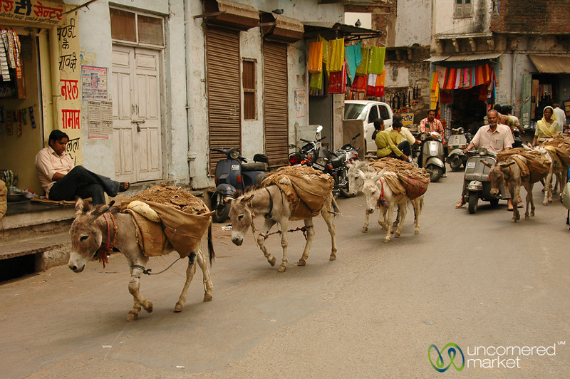 Donkey Train Through Udaipur, India
