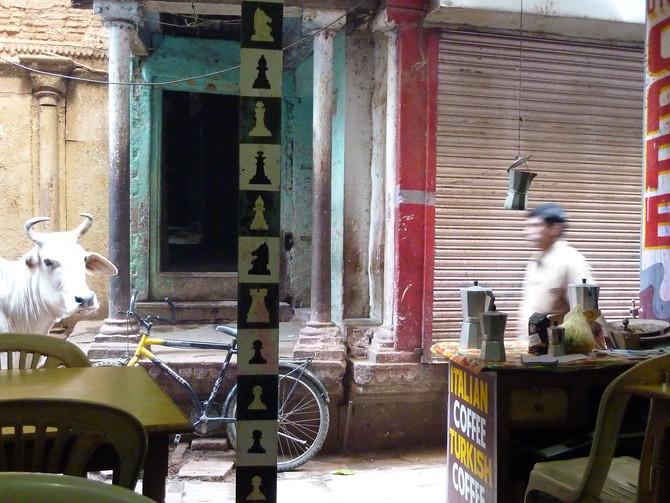 Coffeeshop cow - Varanasi