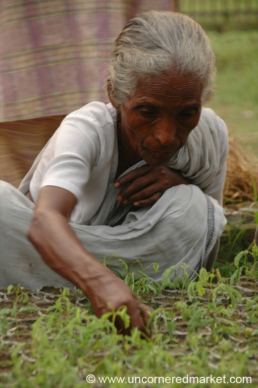 Indian Woman Working Land - West Bengal, India