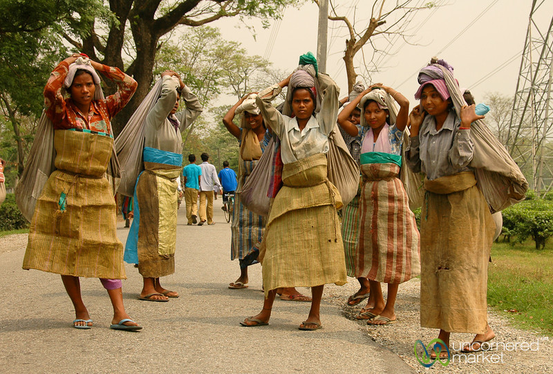 At the Tea Plantation - West Bengal, India