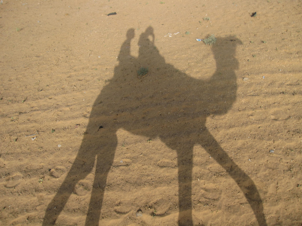camel reflection in the sand