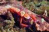 Shrimp_120930b