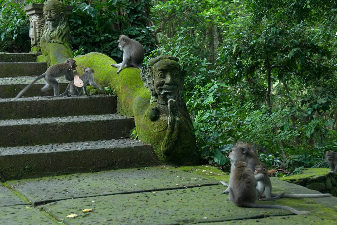 Monkey stealing shoes at Bali