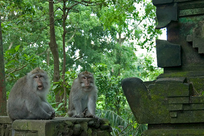 Two monkeys resting on a wall in Bali, Indonesia