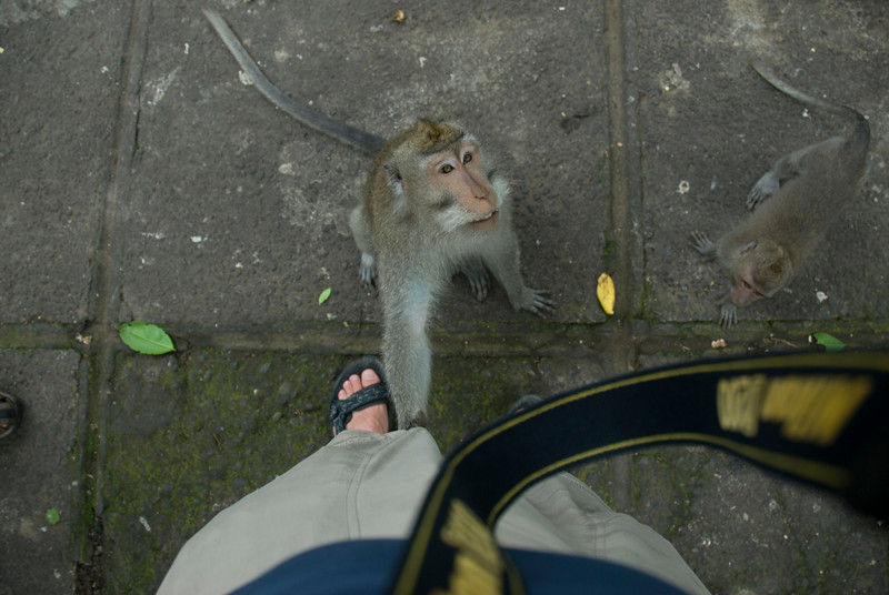 Monkeys looking up asking for food from tourists