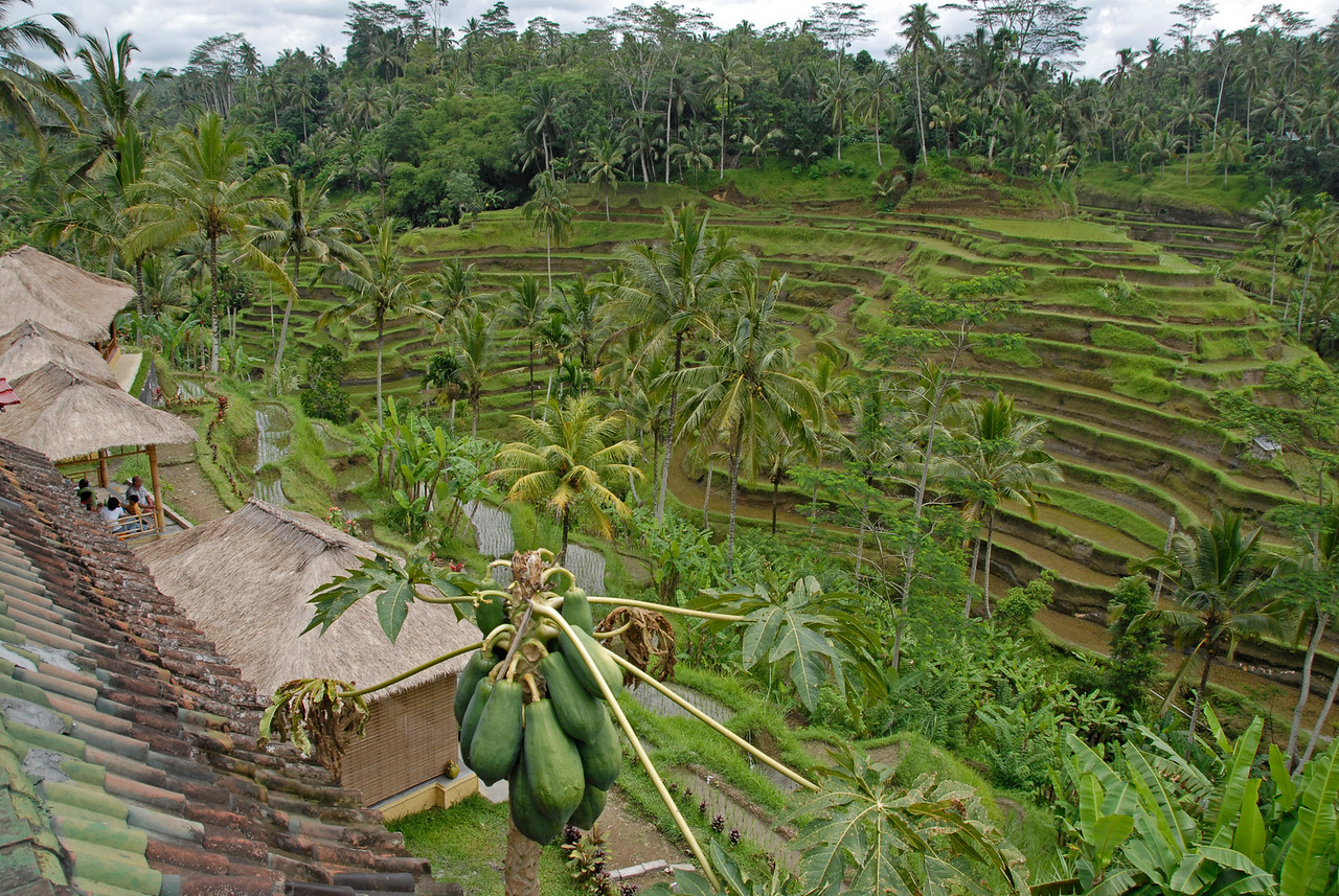 Overlooking view of the Tegalalang Rice Terrace in Bali, Indonesia