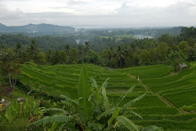 Coastal view and rice fields at Bali, Indonesia