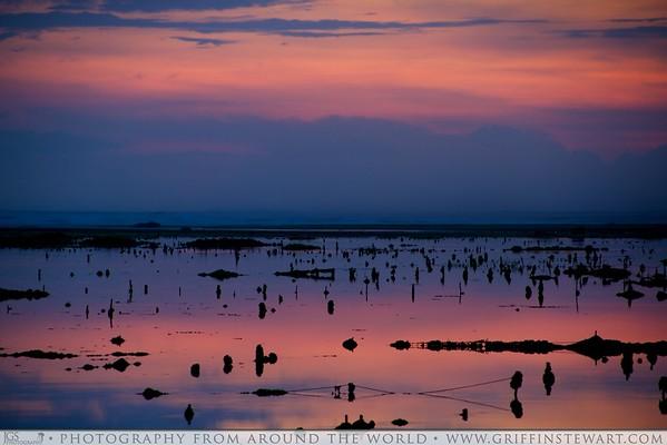 Sunset Over The Seaweed Nets - Ungasan, Indonesia
