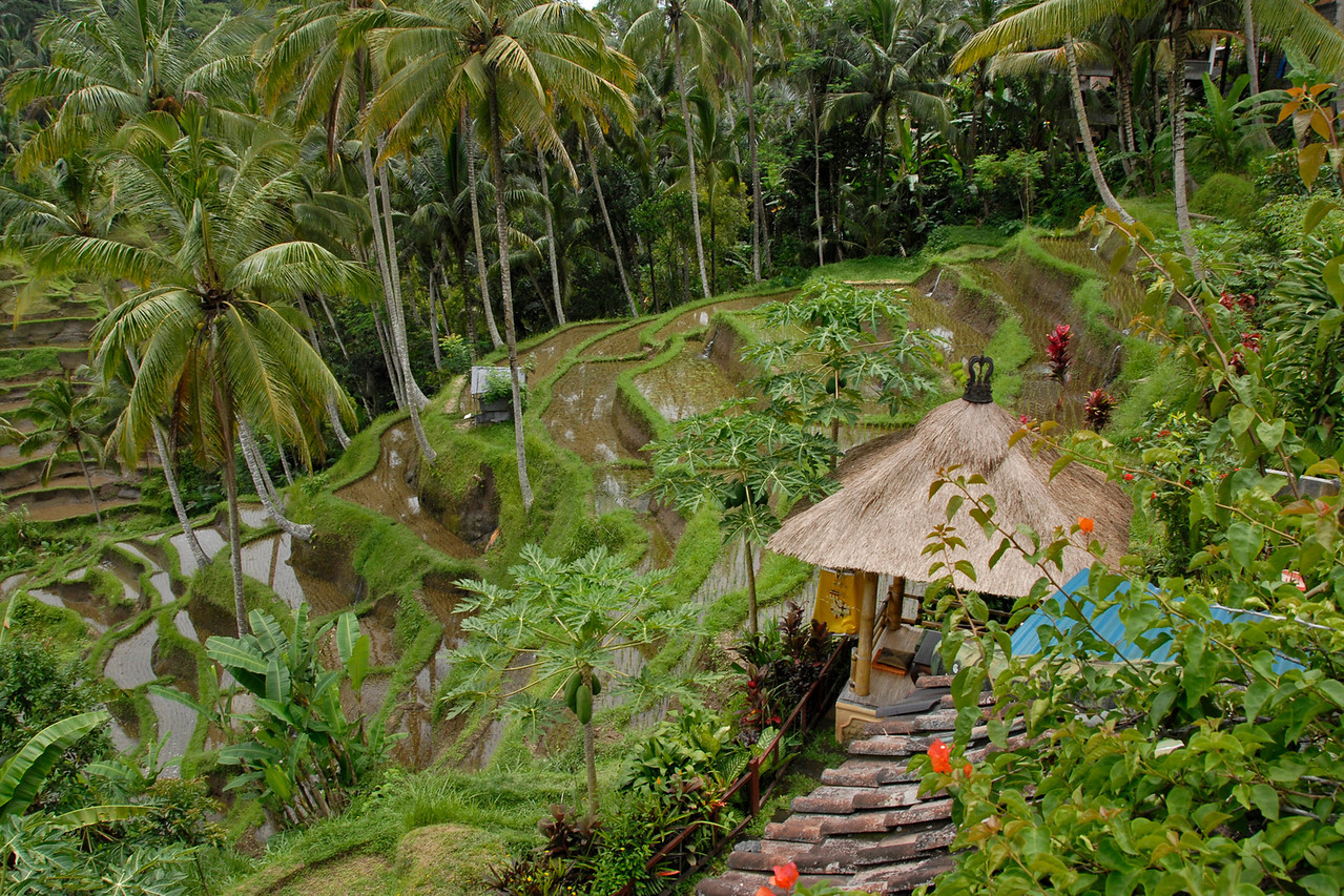 Huts near Tegalalang Rice Terrace in Bali, Indonesia