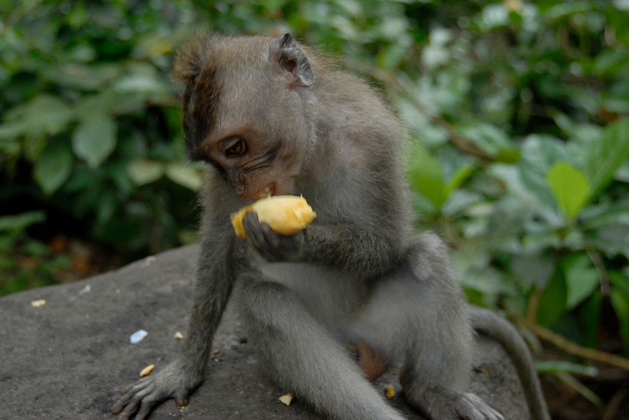 """Oh banana, I love you so much"" Bali, Indonesia"