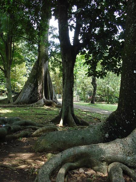 Bogor Botanical Gardens, Bogor - Indonesia