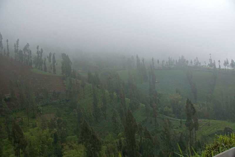 Foggy shot of farm fields on the road to Mount Bromo