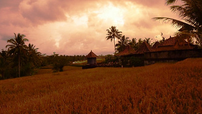 Rumah Capung, living in the middle of ricefields and cocunut groves