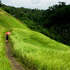 Campuan Ridge, a day hike into the rice fields