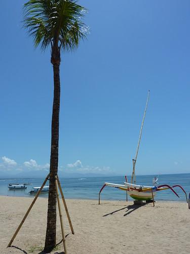 Beach Tree, Sanur Bali - Indonesia