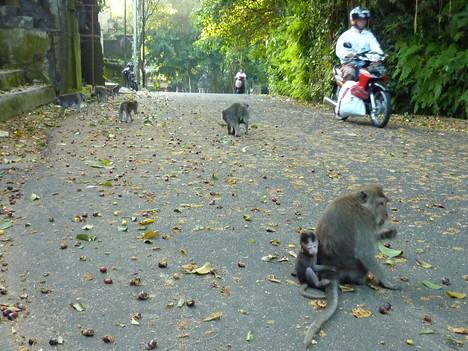 Monkey Forest Road, Ubud - Bali