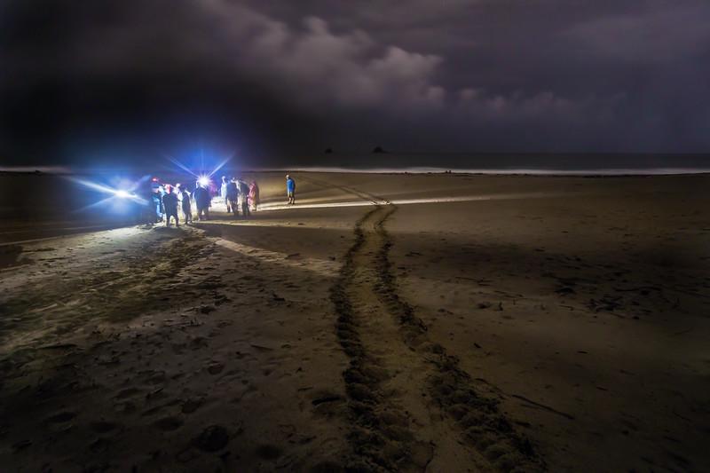 Sukamade-Beach-turtl#162A38