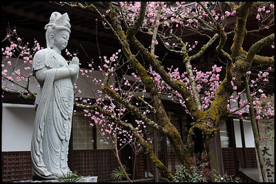 Temple gardens, Koyasan