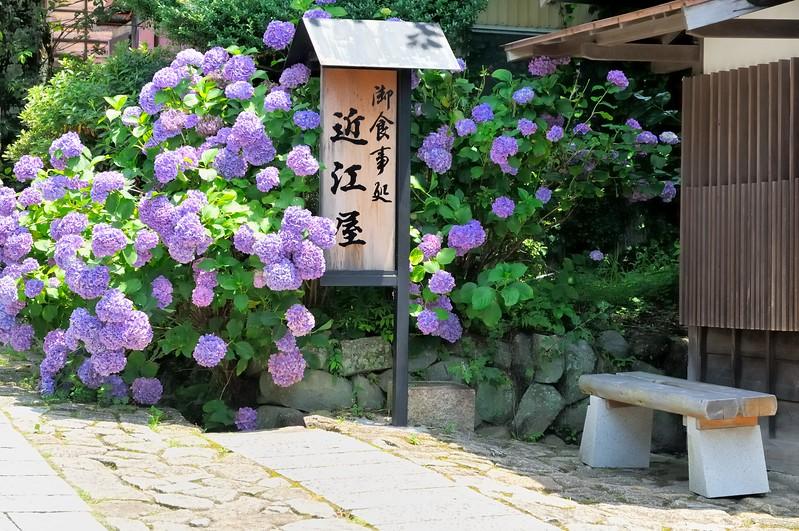 Shady Hydrangea stop on the Nakasendo - Edo Period post road - Magome, Japan