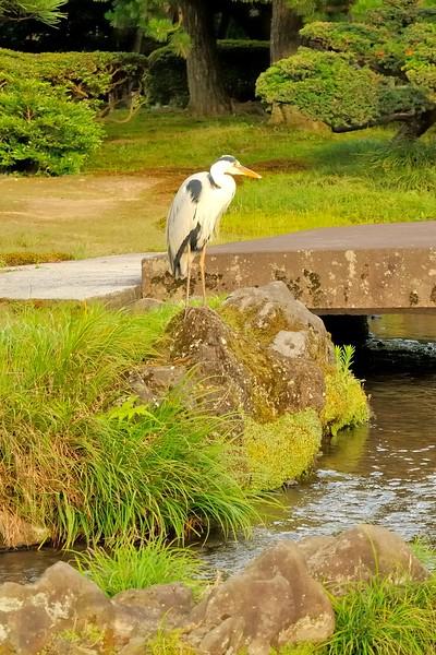 Stork in Kenroku-en Garden - Kanazawa, Japan