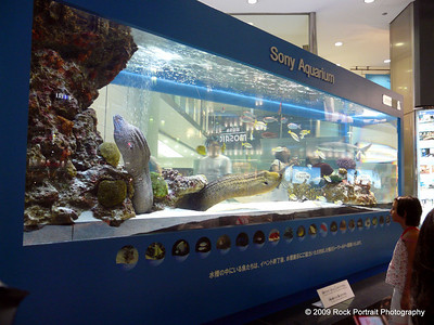 Sony's very real aquarium in Ginza