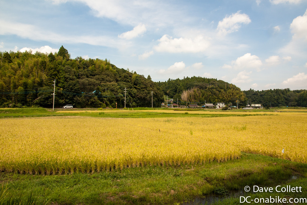 Rice paddys on the way to my campsite