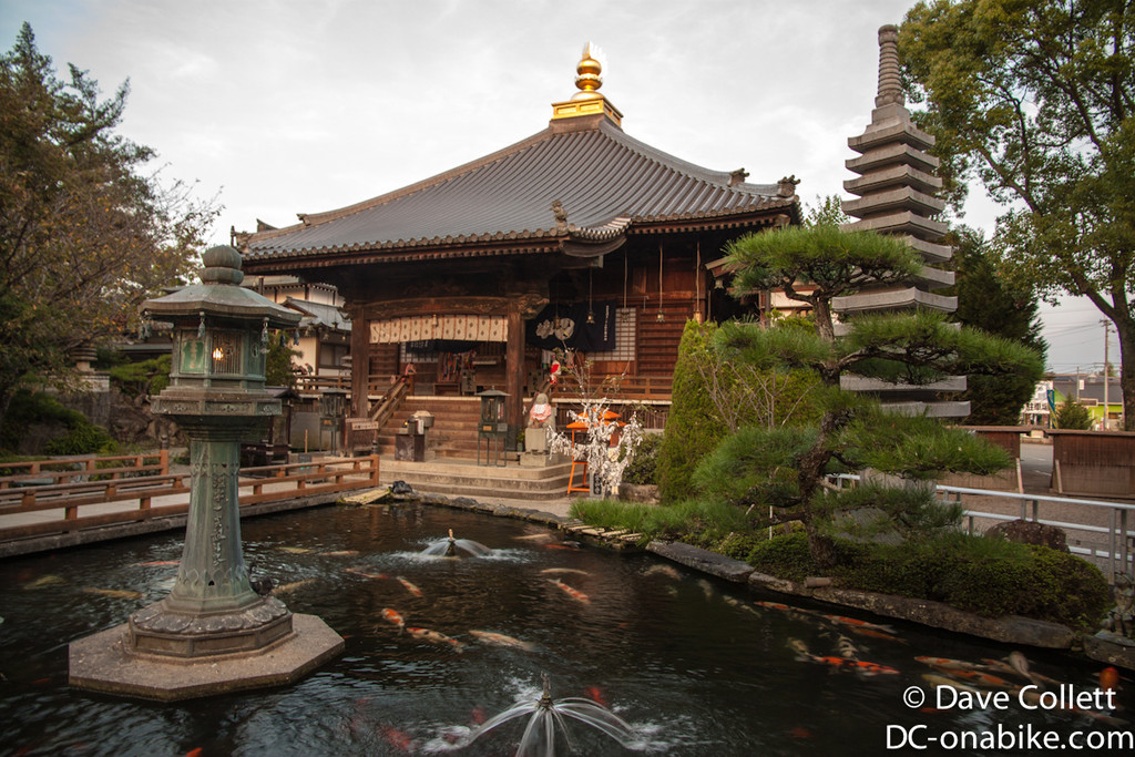 Temple with some massive Carp!